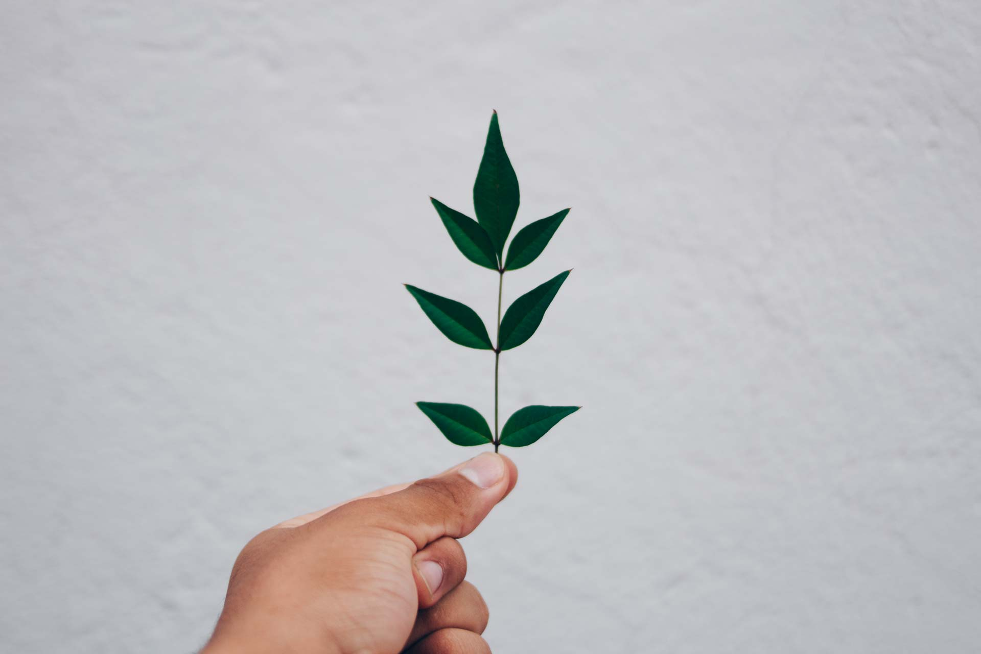 Produits écologiques Nim'Net